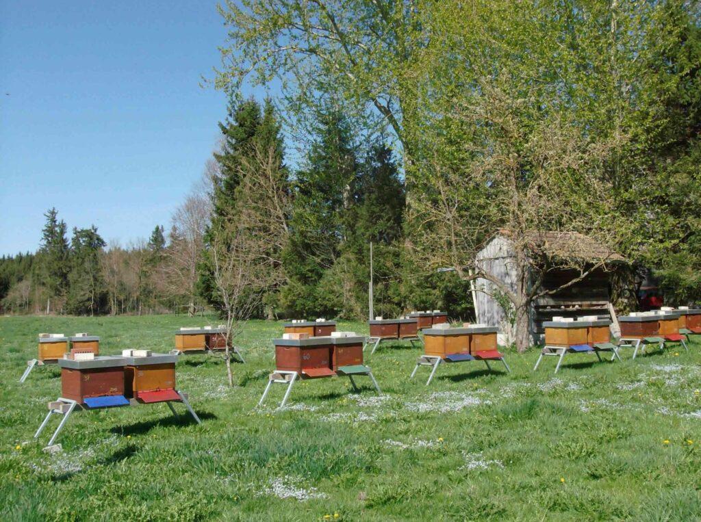 beste Imker haben die gesündesten Bienen, die dann stark und trachtreif in die Saison starten