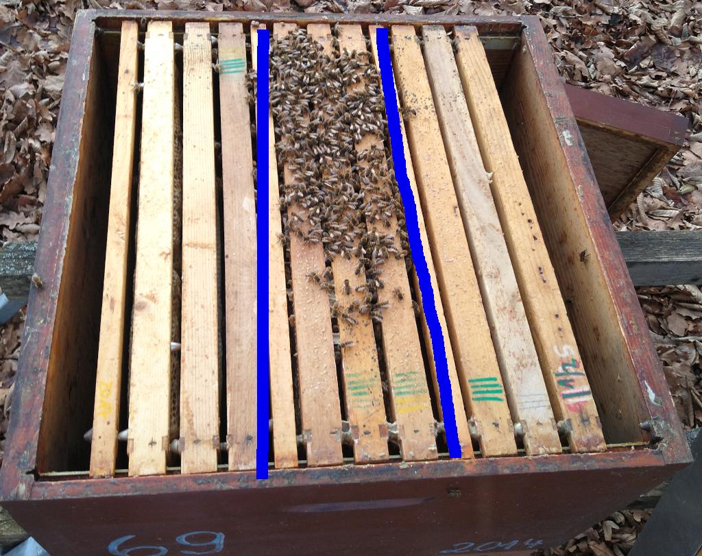 beste Imker gesündesten Bienen, wenn der Brutraum schon früh im Jahr angepasst wird