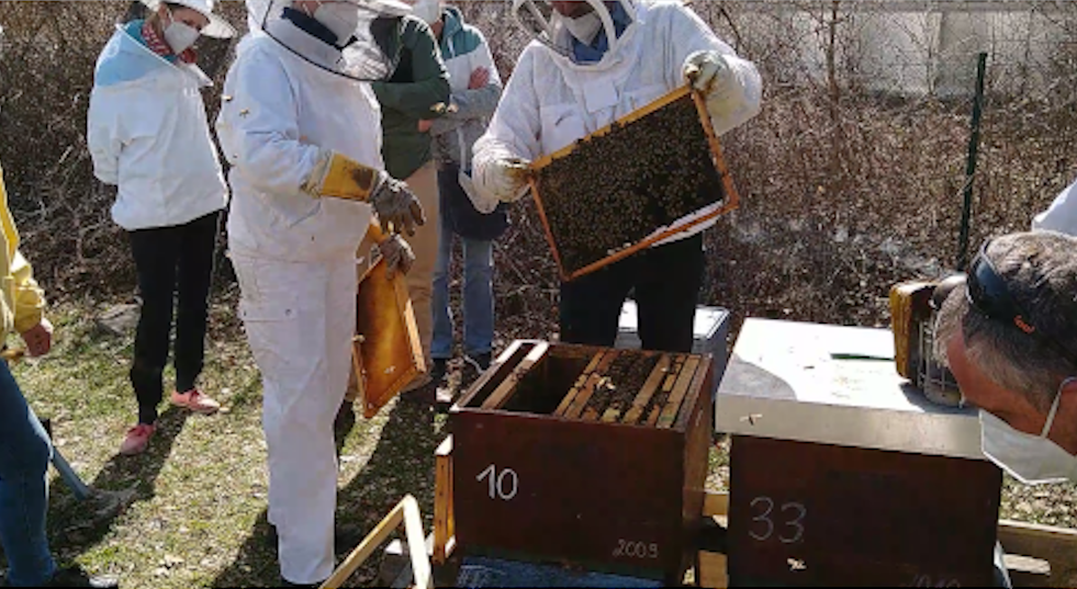 Kurstermin Online-Jahreskurs Video Bienen-Bearbeitung