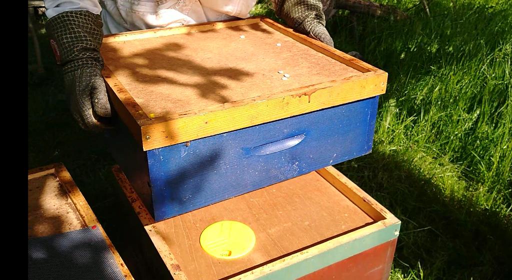 der Honigraum kommt über die Bienenflucht. Die Bienen laufen von hier zur neuen Königin in die untere Beute.